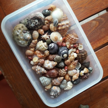 Jeffrey's Bay shells