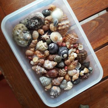 Jeffrey's Bay shells