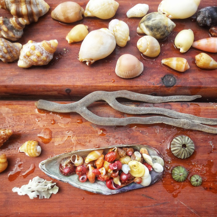 Sally's shells